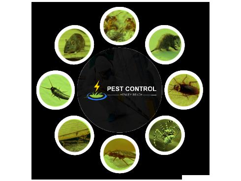 Pest Control Henley Beach