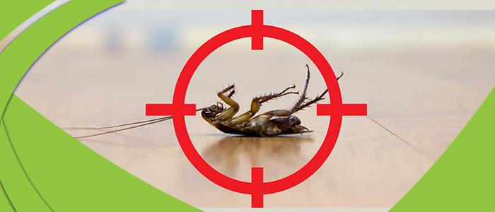 Cockroach Control Henley Beach